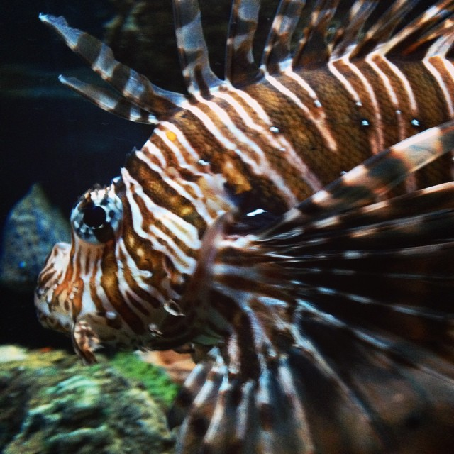 Sealife is one of my favourite places @altontowers ???? #lbloggers #altontowers #scarefest #halloween #sealife #lionfish