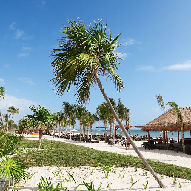 Tiki huts, white sands and beautiful palms ?☀️? #lbloggers #holiday #mexico #paradise