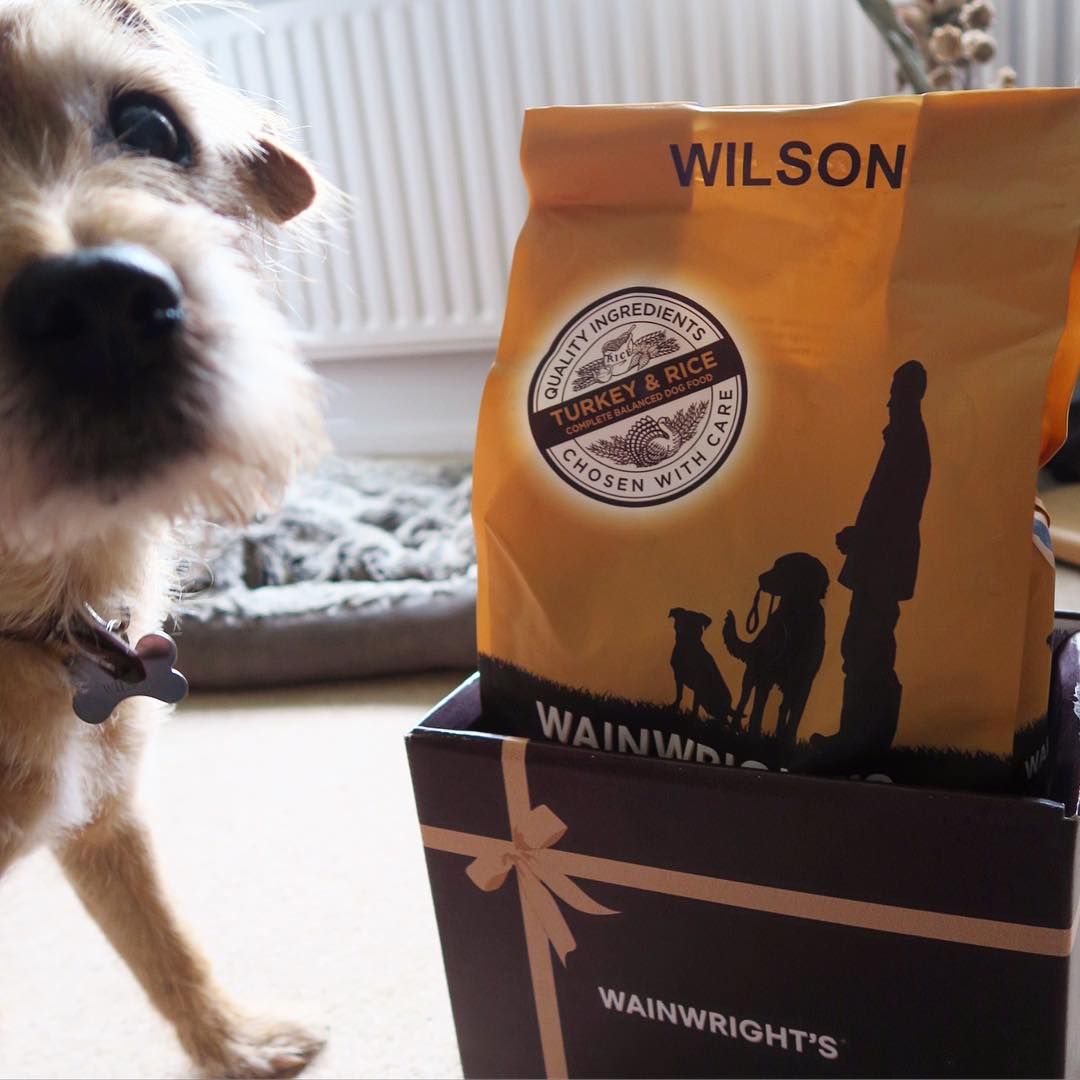 Wilson got a surprise delivery this morning  thank youhellip