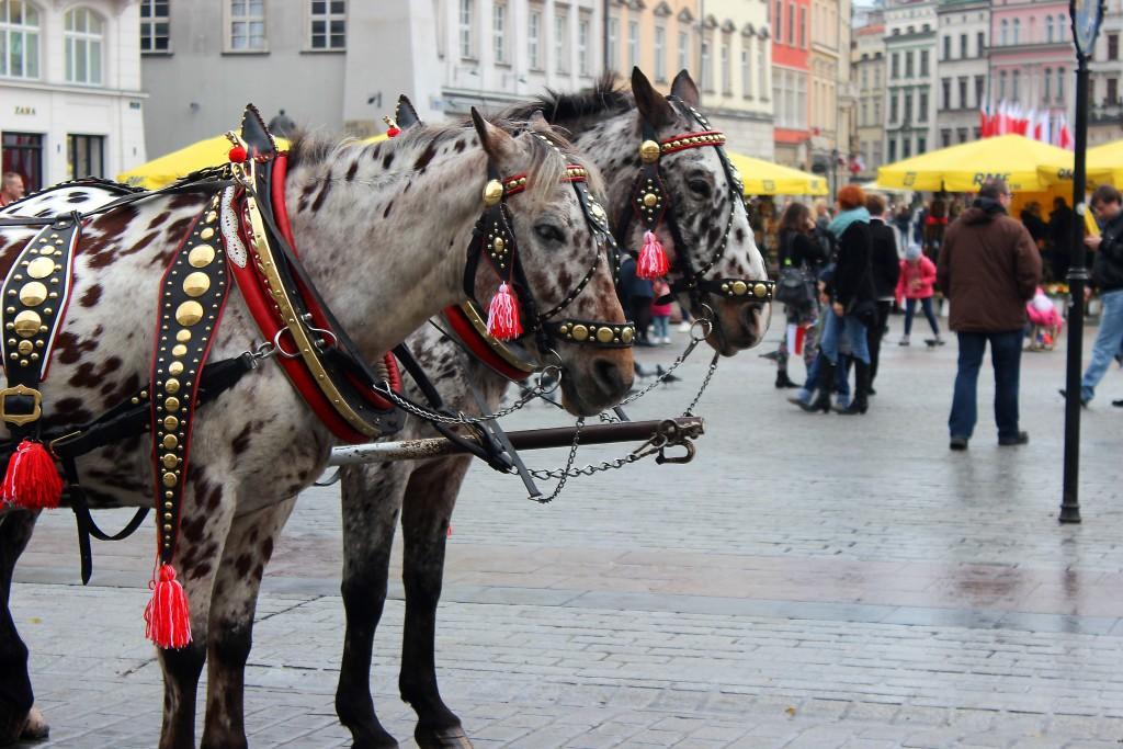 Krakow Poland 2015 (19)