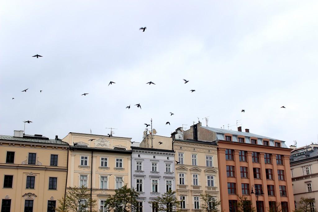 Krakow Poland 2015 (28)