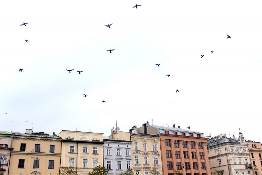 Krakow Poland 2015 (29)