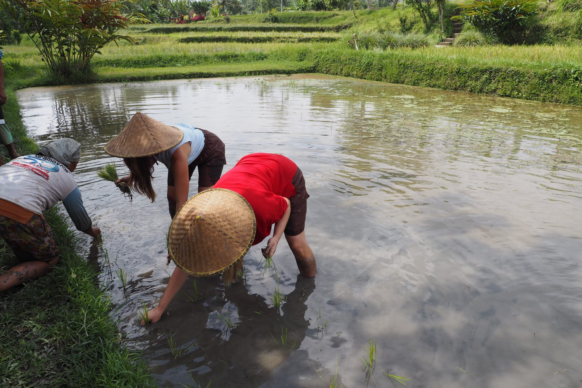 Rice Fields, Cooking Class in Bali and Uluwatu Temple