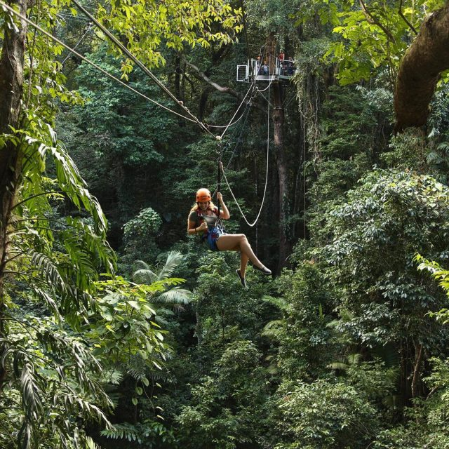 Absolutely LOVED Jungle Surfing in the Daintree Rainforest even thoughhellip