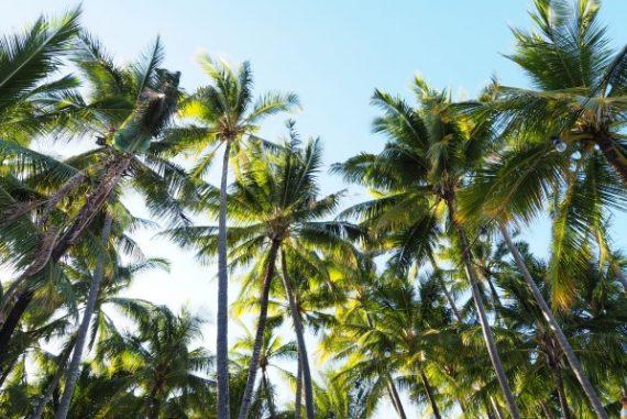 Palm Cove, Queensland