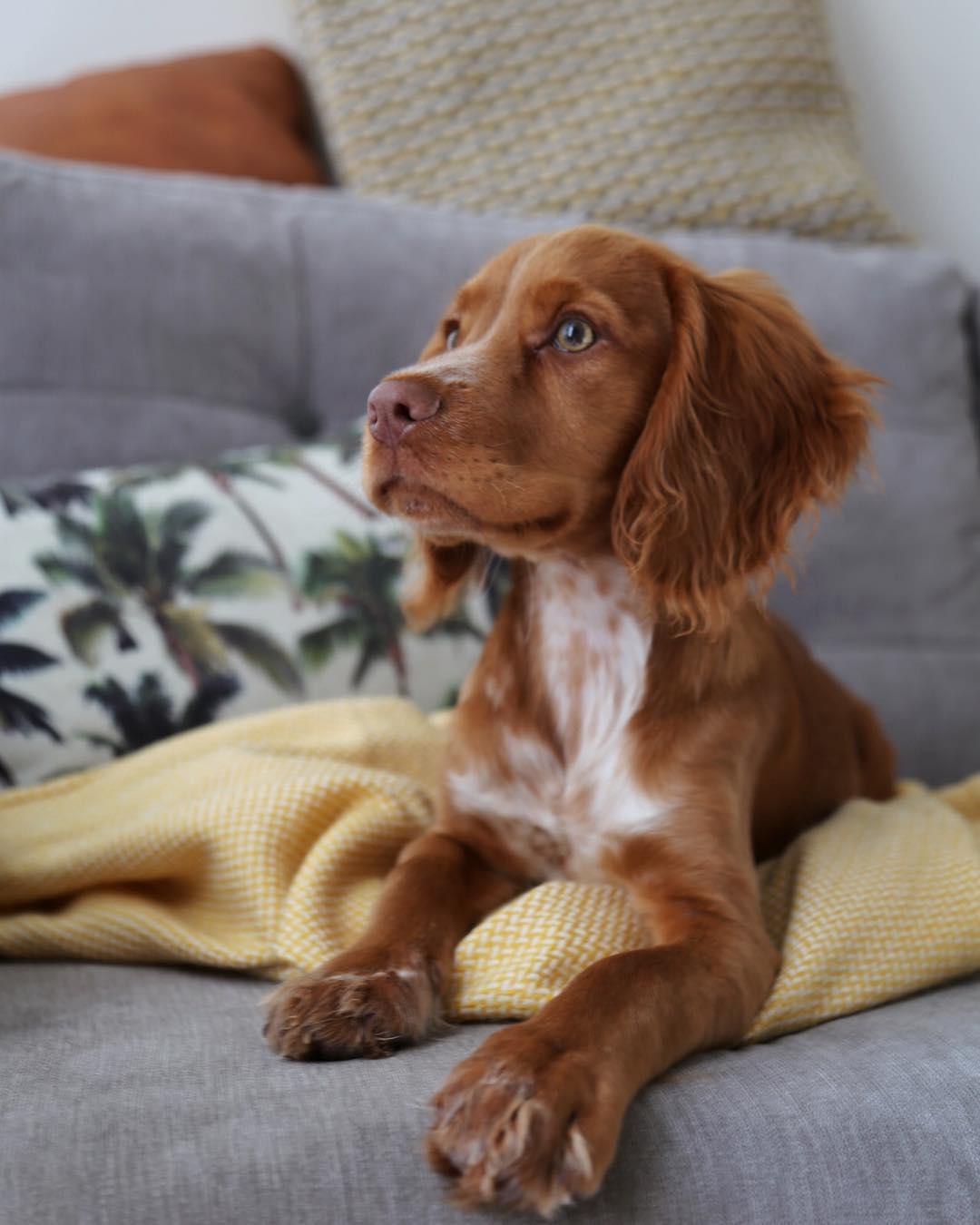 xameliax puppy
