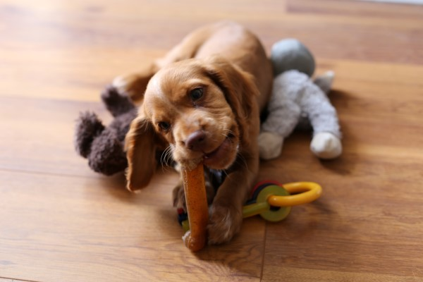 What To Ask When Buying A Puppy