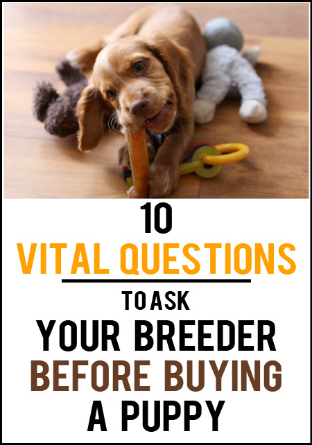 Questions to ask your breeder before buying a puppy