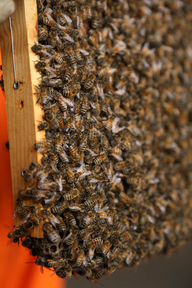 be a beekeeper for the day in devon