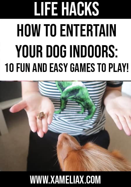 how to entertain your dog indoors